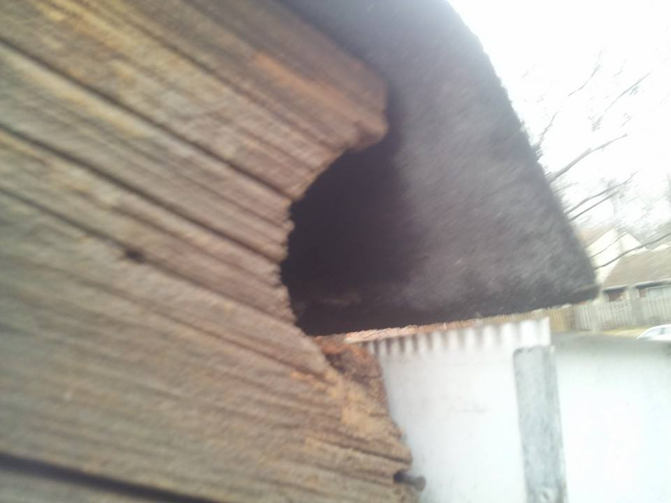 Squirrel Damage to the roofline.  Repair service for squirrel damage.